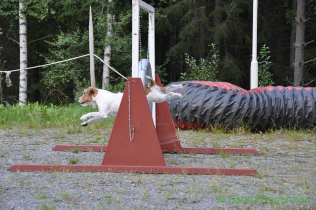 Pila leirilla hyppaa rengasta