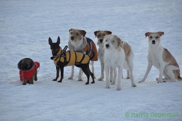 6 koiraa