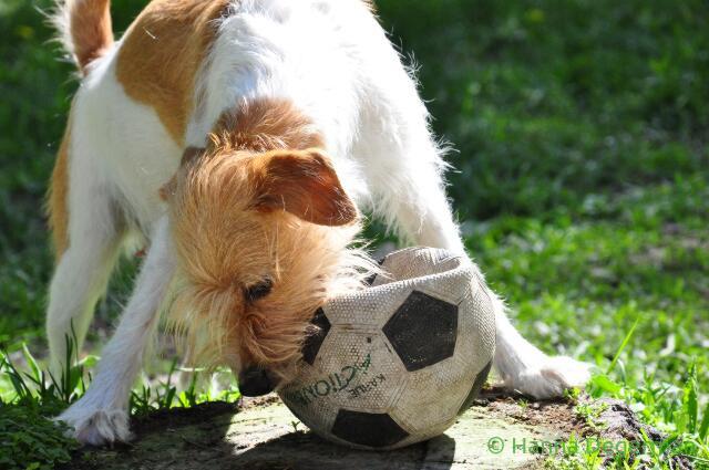 Kuje ja pallo