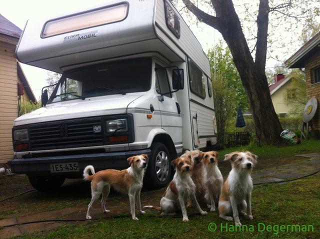 auto ja koirat