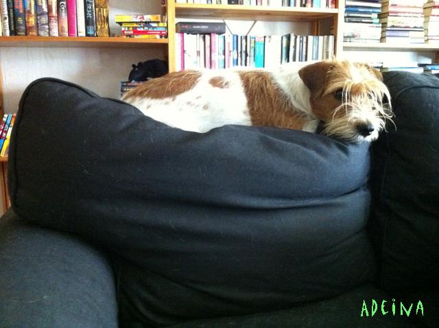 Pila sohvalla