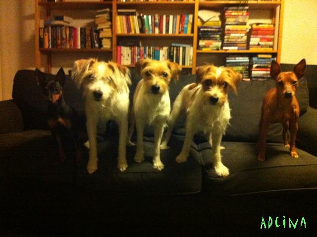 laumallinen koiria