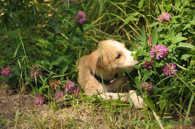 tapa kukkasissa