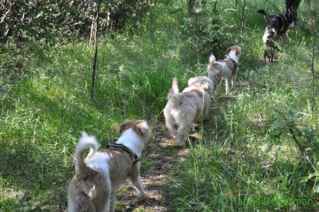 Kaikki koirat lenkilla